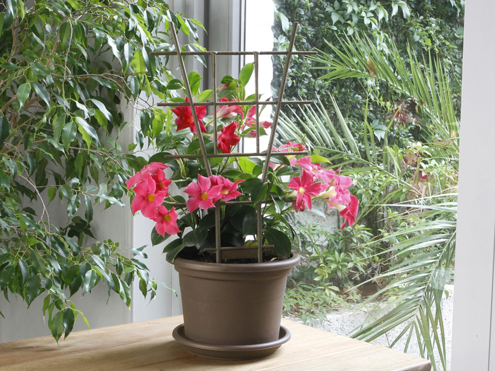 Létra formájú virágfuttató növénytámasz