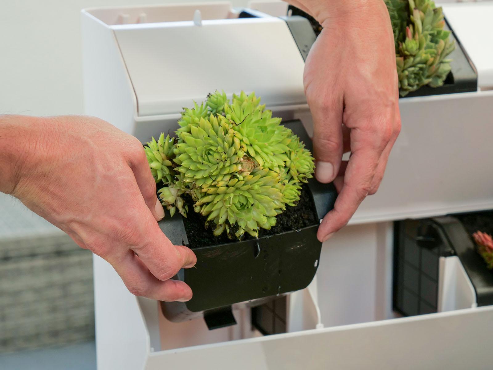 A kiemelhető ültetőedény megkönnyíti a növények telepítését!