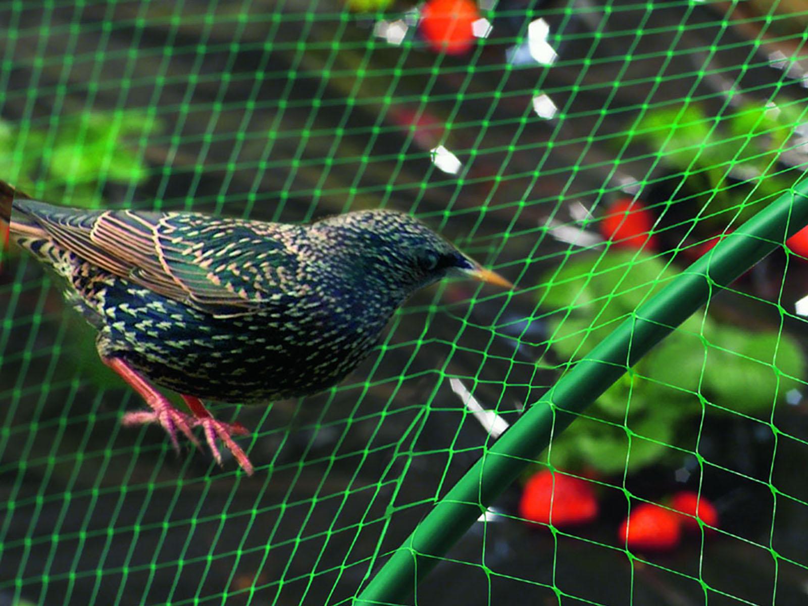 Madár elleni háló: kártevő madarak ellen védelmet nyújtó műanyag háló.