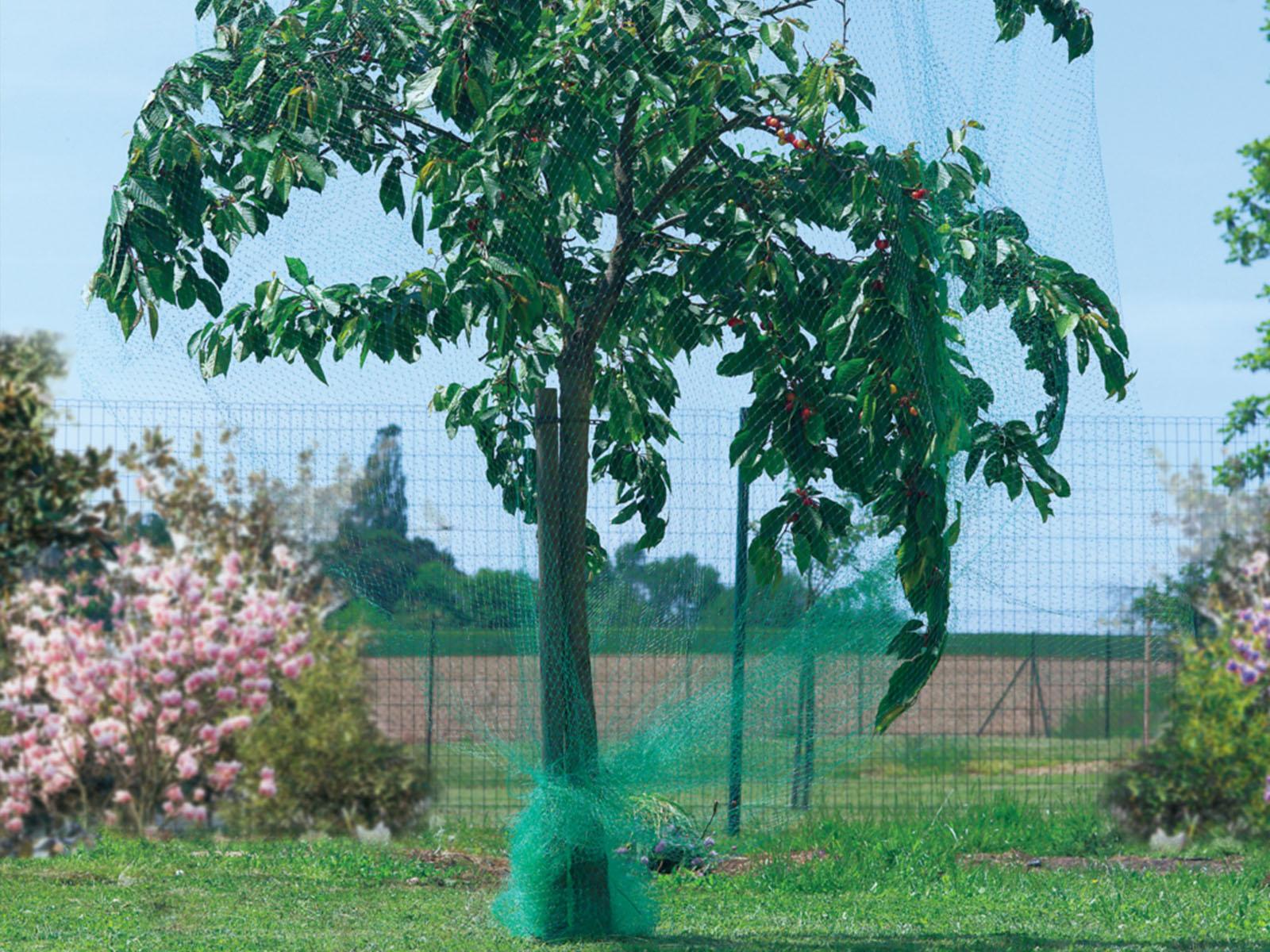 Madárháló, madár elleni háló cseresznyefa tetejére terítve.