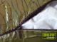 Függöny Center Díszpárna huzat flitteres (28x48 cm) Zöld