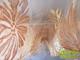 Organza függöny virág mintás (280x250 cm) - Krém