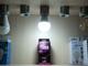 INESA LED lámpa E27 (13W/180°) Körte - hideg fehér
