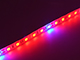 Special LED LED szalag kültéri 5050-60 (24 Volt) - növénytermesztéshez Kifutó!
