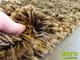 Shaggy szőnyeg 5 cm-es, (3082) Barna 80x250 cm