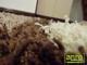 Függöny Center Shaggy Bantu szőnyeg 5 cm (273) natúr mogy. hull. 80x150 cm