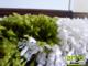 Shaggy szőnyeg 5 cm-es, (42) Zöld-krém lábtörlő 40x70 cm