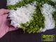 Függöny Center Shaggy szőnyeg 5 cm-es, (42) Zöld-krém 60x120 cm