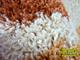 Shaggy szőnyeg 3 cm-es, (700A) Terra 120x170 cm