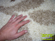 Shaggy szőnyeg 3 cm-es, (0912a) Csont 160x220 cm