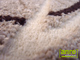 Függöny Center Kevert szálú, nyírt szőnyeg (1511a) Beige 120x200 cm
