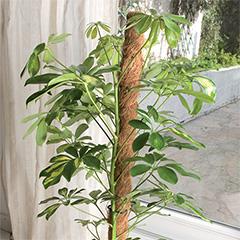 Coco természetes kókuszkaró, növénykaró kókuszból (60 cm)
