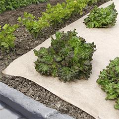 Talajtakaró fólia lebomló növényi szövetből Jutesol 140 g/m2 (0.8x10 méter) natúr
