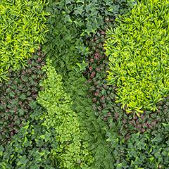 Vertical Costa műanyag zöldfal többféle növénnyel (100x100 cm)
