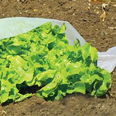 Kertészeti fátyolfólia Climatic, 17 g/m2, fehér színű (160 cm x 5 méter)