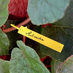 TREE LABEL műanyag, függő cimke (40db/csomag) sárga