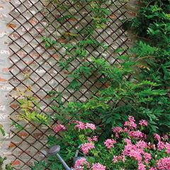 Willow Trellis fűzfa apácarács, kihúzható (50x150 cm) barna