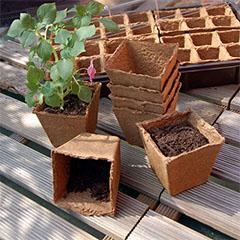 Growing Pots 6x6 cm-es tőzegcserép (20 db)