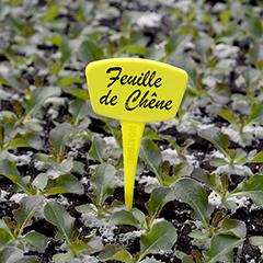Label 15 cm-es, műanyag, sárga, leszúrható jelölőtábla növényhez, palántához (10 db) íves