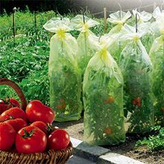 Kertészeti fóliatömlő paradicsom neveléshez kötözővel, TomatoTube, 50 mikron vastag PE (0.6x10m)