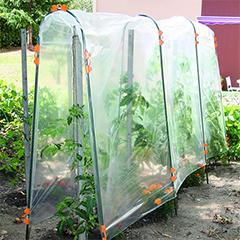Kertészeti fólia paradicsom neveléshez, Tomato Film, 70 mikron vastag PE (3x3.5m)