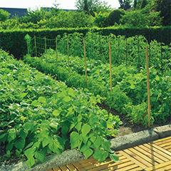 TRELLINET növénytartó háló (1 x 500 méter/tekercs) színtelen