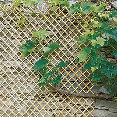 Wick Trellis vessző apácarács, kihúzható (50x150 cm) natúr