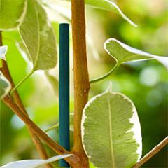 Bamboo Split 40 cm-es festett bambuszpálca, bambusz növénykaró  (25 db) zöld